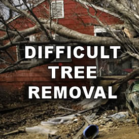 Trussell's Tree Service - call 817-526-6945